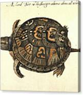 Common Box Tortoise, 1585 Canvas Print