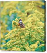 Common Buckeye Butterfly Hides In The Goldenrod Canvas Print