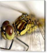 Common Darter  Dragonfly Compound Eye And Synthorax Canvas Print