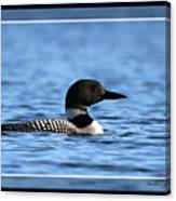 Common Loon, Framed Canvas Print
