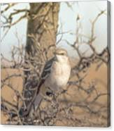 Common Mockingbird Canvas Print