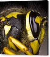 Common Wasp Vespula Vulgaris Close-up Canvas Print
