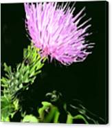 Common Weed Canvas Print