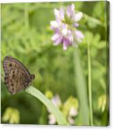 Common Wood-nymph 2013-1 Canvas Print