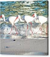 Companions On Coquina Beach Canvas Print