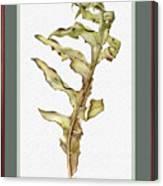 Compass Plant, Fall Canvas Print