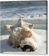 Conch Shell In Snow Canvas Print