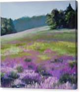 Concord Loosestrife Canvas Print
