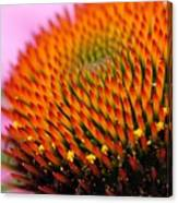 Cone Flower Closeup Canvas Print