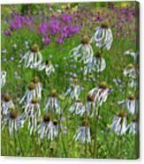 Cone Flower Fairy Dance Canvas Print