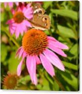 Cone Flower Visitor Canvas Print