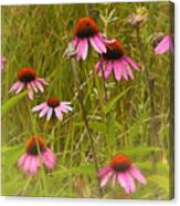 Cone Flowers In The Meadow Canvas Print