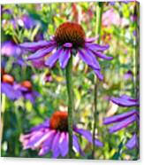 Coneflower Pedals Canvas Print