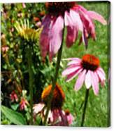 Coneflowers In Garden Canvas Print