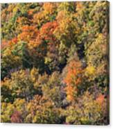 Connecticut Fall Color Canvas Print