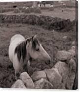 Connemura Horse-signed-#300 Canvas Print
