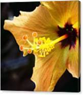 Conservatory Hibiscus Canvas Print