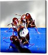 Consider The Ants 2 Of 3 Canvas Print