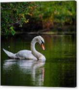 Contemplating Swan Canvas Print