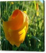 Contemporary Orange Poppy Flower Unfolding In Sunlight 10 Baslee Troutman Canvas Print