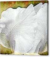 Contemporary White Iris Canvas Print