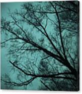 Contrasted Trees Canvas Print