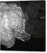 Contrasts In Floral Kingdom In Black And White. Canvas Print