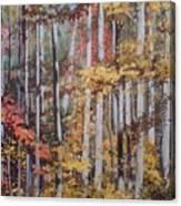 Converging Colors Canvas Print