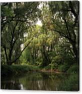 Cook County Forest Preserve No 6 Canvas Print