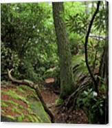 Cook Forest Canvas Print