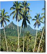 Cook Islands Canvas Print
