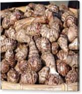 Cooked Taro Root Canvas Print