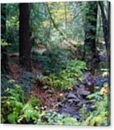 Cool Creek On Mt Tamalpais Canvas Print