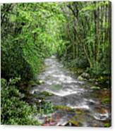 Cool Green Stream Canvas Print