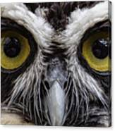 Cool Peepers Canvas Print