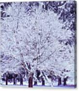 Cool Sunset Essence Of Winter Canvas Print