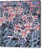 Cool Sunset Field Of Tiger Lillies Canvas Print