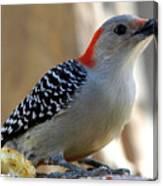 Cool, Woodpeckers Like Sunflower Seeds Canvas Print