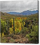 Coon Creek Looking South Canvas Print