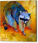Coon Canvas Print
