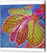 Copper Beech Leaves Canvas Print