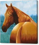 Copper Bottom - Quarter Horse Canvas Print