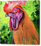Copper Maran French Rooster Canvas Print