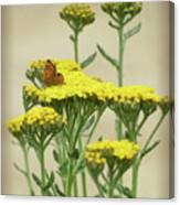 Copper On Yellow - Butterfly - Vignette 2 Canvas Print