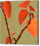 Copper Plant Canvas Print