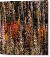 Copse Of Color  Canvas Print