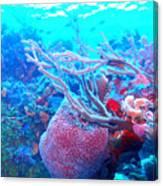 Coral Candy Canvas Print