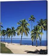 Coral Coast Palms Canvas Print