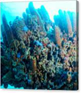 Coral Crossbeam Canvas Print