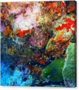 Coral Eel Canvas Print
